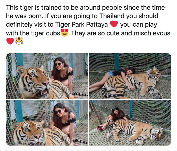 Young Heroine Blasted For Tiger Pics